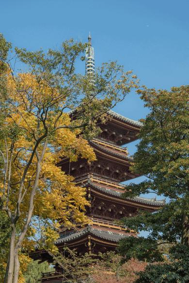 Cosa vedere a Tokyo ? Parco di Ueno