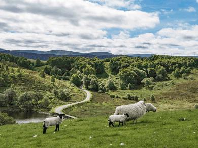 Paesaggi di Loch Ness