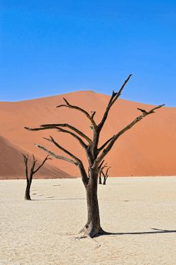 Spettacoli Naturali nel Deserto del Namib