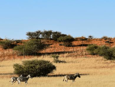 Viaggio in Namibia - Deserto del Kalahari