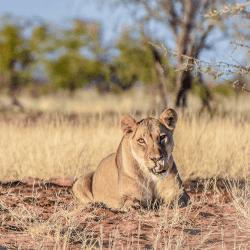 Etosha National Park, Safari in Namibia