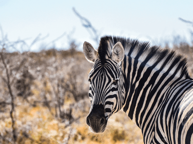 Safari in Namibia, self drive