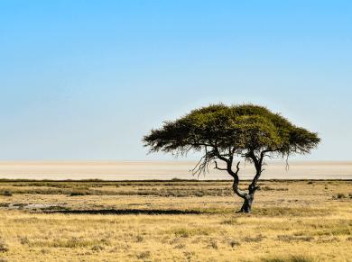 Paesaggio dell'Etosha National Park