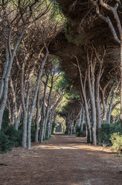La pineta della Maremma Toscana